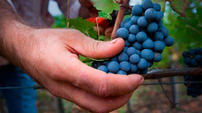Italia en Global Wine 2020
