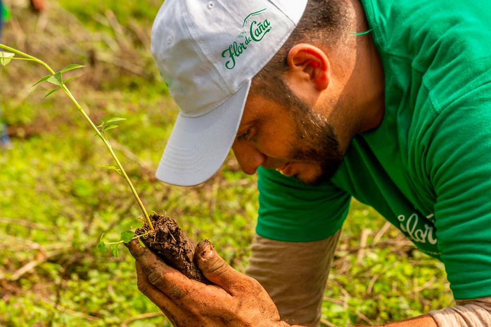 Flor de Caña trabaja por un futuro más verde