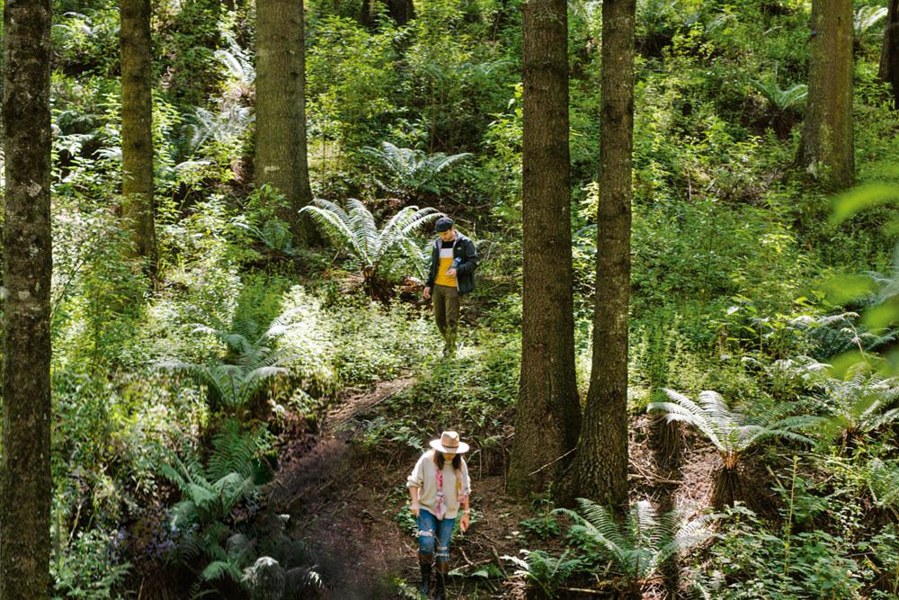 Cubo; una profunda experiencia en el bosque