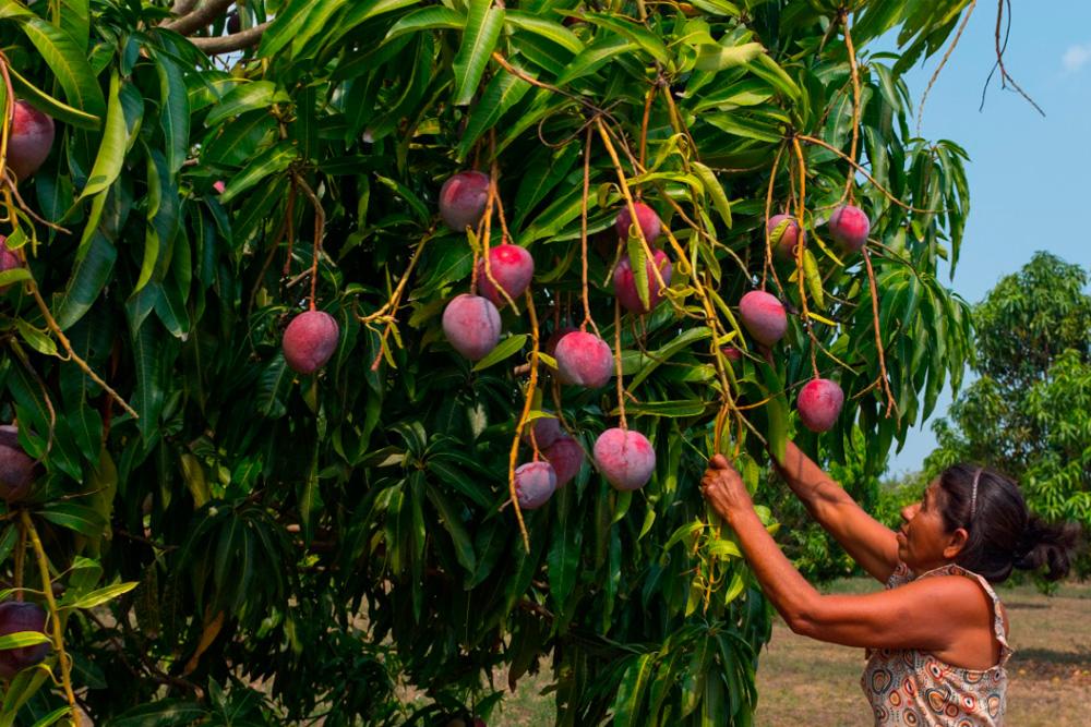 Rainforest Alliance te invita a dar los primeros pasos hacia la sostenibilidad